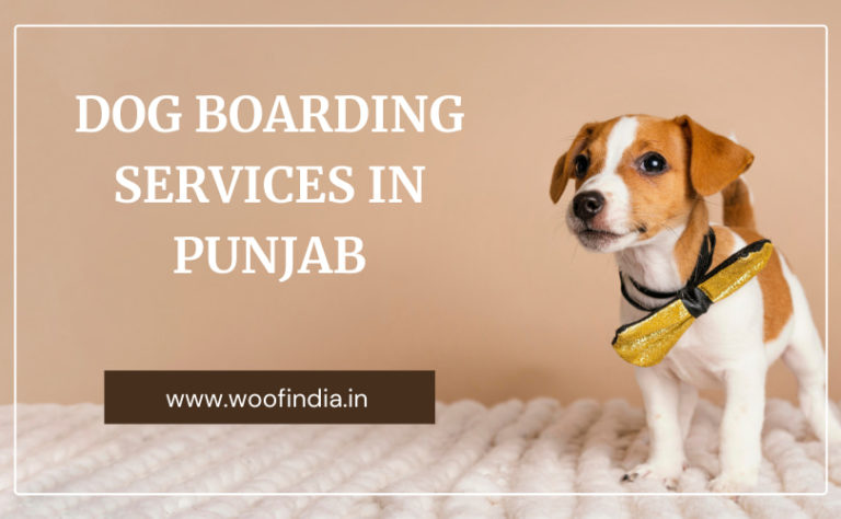 Dog Boarding Services In Punjab
