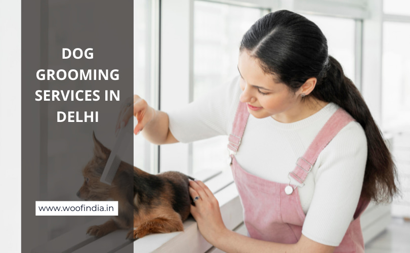 Dog Grooming Services In Delhi