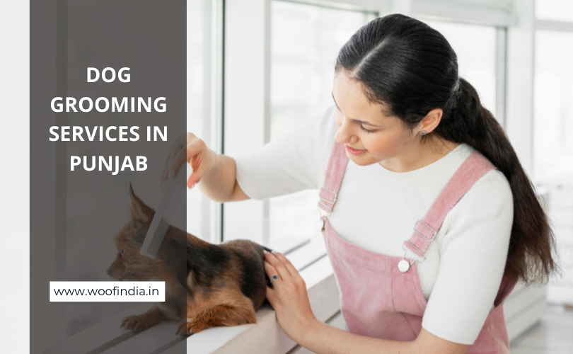 Dog Grooming Services In Punjab